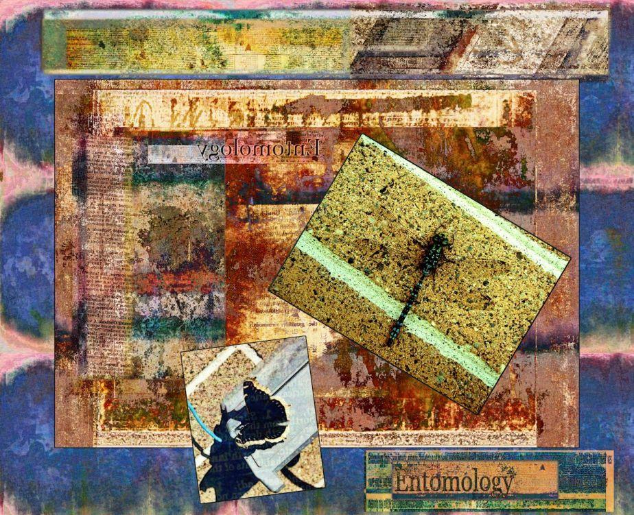 Taped damaged entomology paper